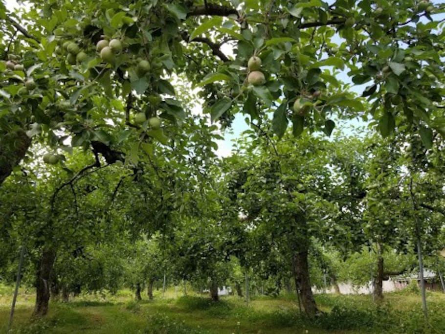 りんご農家の営む宿です。