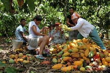 Socializing on the farm around harvesting cacao.