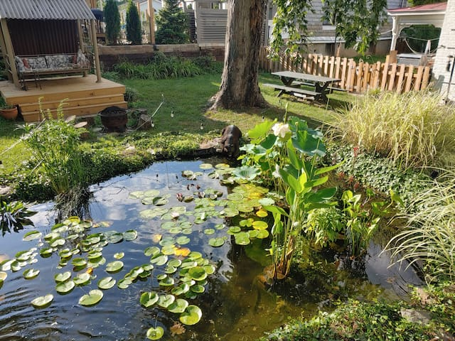 Water Lily Garden with Covered Swing and Seating for Campfire. There's free firewood underneath the side porch of the house!  In the water garden are: lotuses, waterlilies, double arrowhead, cardinal flower, thalia, and umbrella palm, among others.