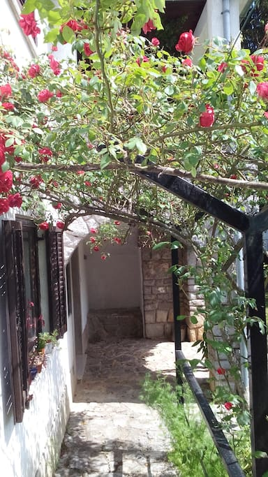 Path of roses (entrance)