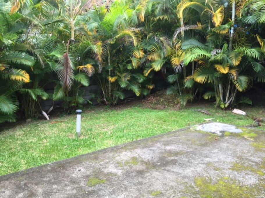 Jardin + terrasse arrières, palmiers