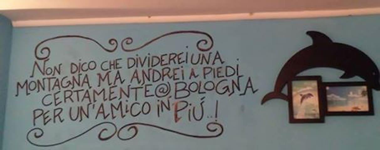 Il Delfino a Bologna