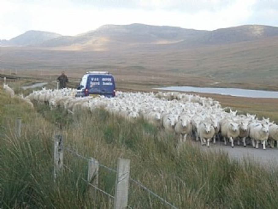 Highland traffic jam
