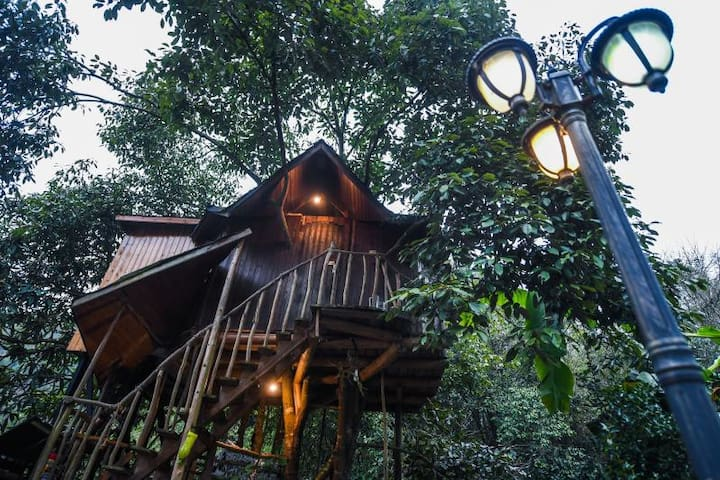 僻地寒楼杭州临安真正的树屋住在树上鸟巢跟松鼠做伴
