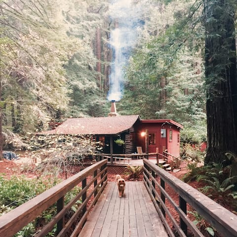 Magical Redwood Log Cabin Retreat - @NicasioNest