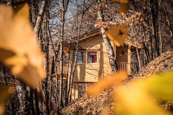 Piccola casa sull'albero - Little Treehouse