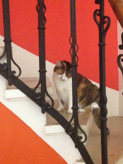 Notre chat, Mimine!