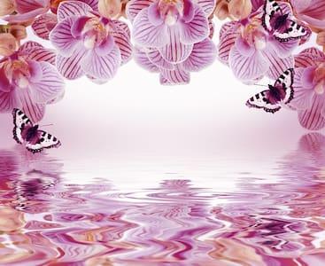 "B&B ""Antica Forneria"" Camera Orchidea - Bed & Breakfast"