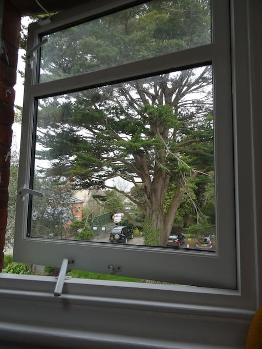 view of the Cedar tree from your bedroom window