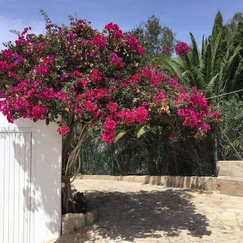 Villa PURA - Close to Jesus & Old Ibiza Town