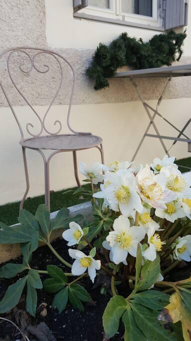 Petites terrasse et ces fleures de jardin de saison