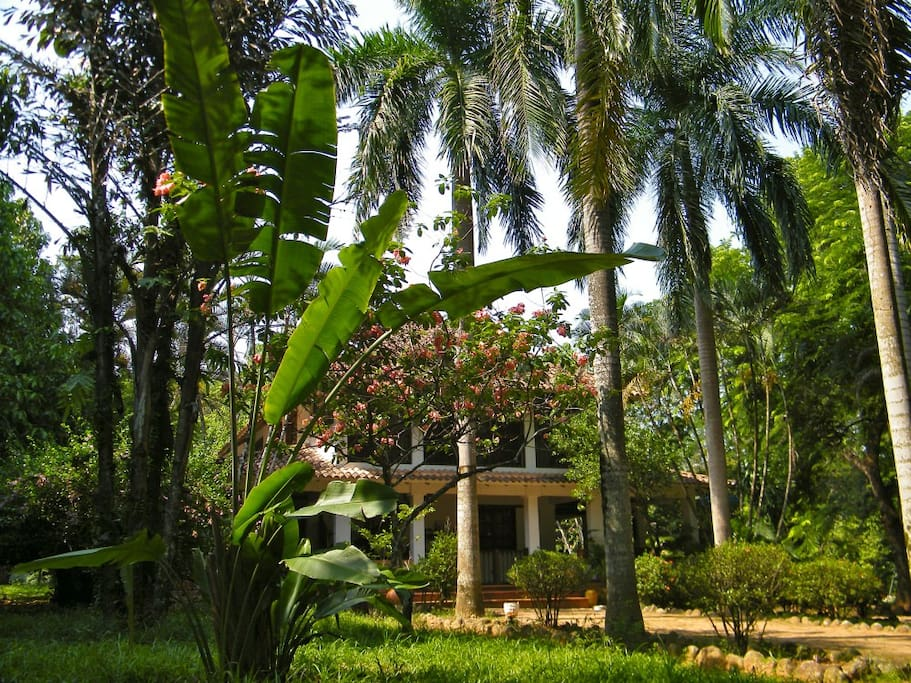 Lush large garden all around (front view)