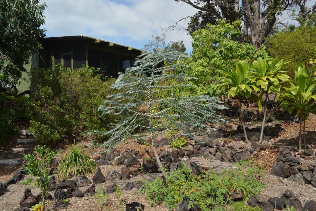 The area around the Hawaiian Cabin