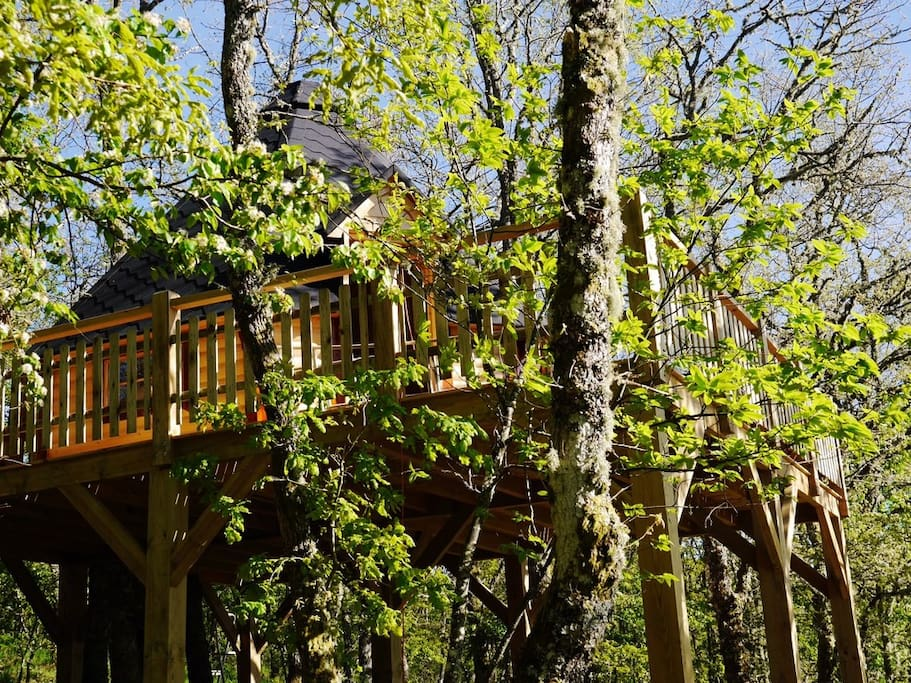 Tree house panoramic view national park casas en el for Alquiler casa arbol