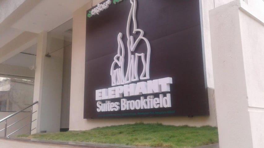Elephant Suites Brookefield