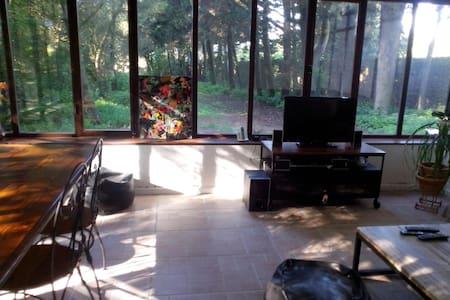 Chambre dans la pinède - House