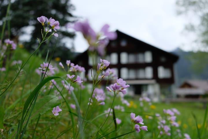 Perfekte Ferien in den Schweizer Bergen - Relax!