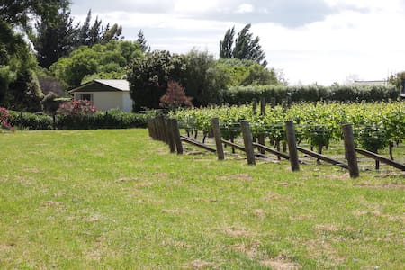 Little Oasis Vineyard, Seddon, Blenheim