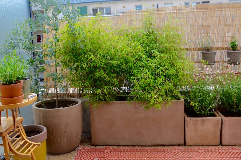 Nice terrace with plants