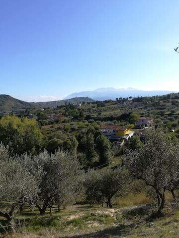 Cottage in the olive farm