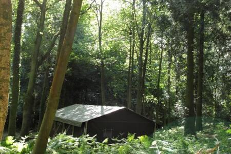 Featherdown Farm Tent - Fordingbridge