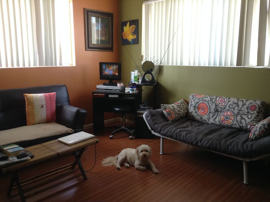 Living Room without Pup:)