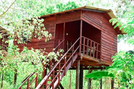Tree house sigiri queens rest