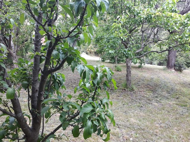 fruit trees next to cottage