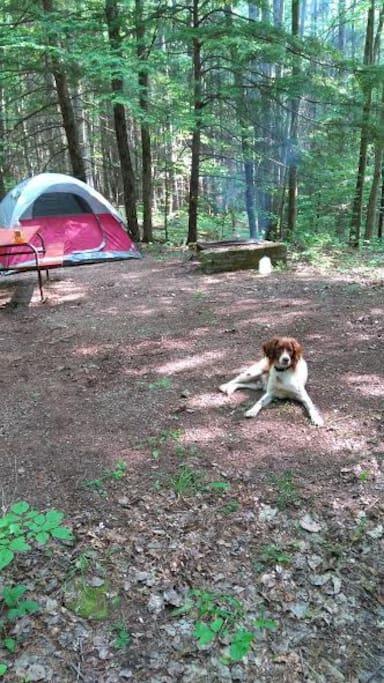 Campsite & Taz