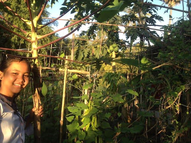Papaya homestay - Krong Siem Reap - Huis
