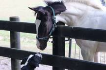 Foal and Hugo meet