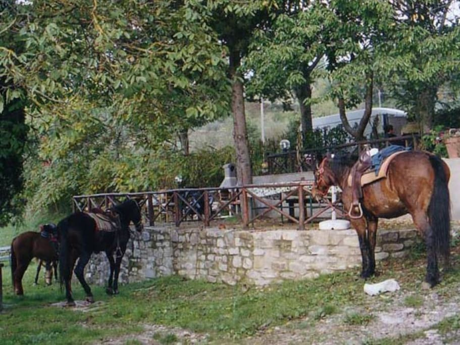 Cavalli in giardino