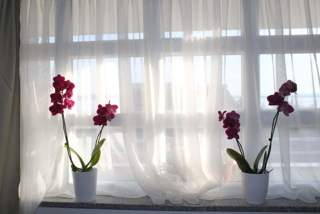 Two orchids on a sunny window