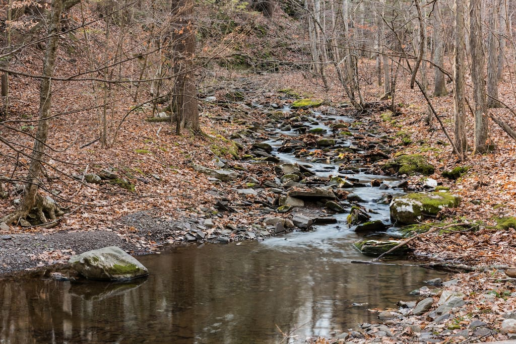 Meandering stream throughout the property and trails