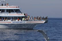 Massachusetts is one of the best places in the world to go on a whale watch.