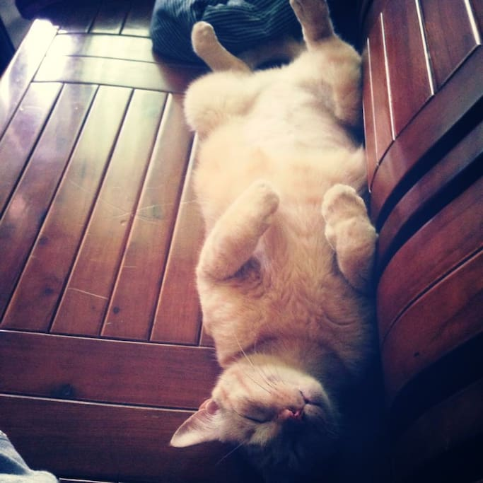 """If you like cats,he's so cute!! His name is """"kojilo """" kind of Japanese name. It means """"little second son"""""""