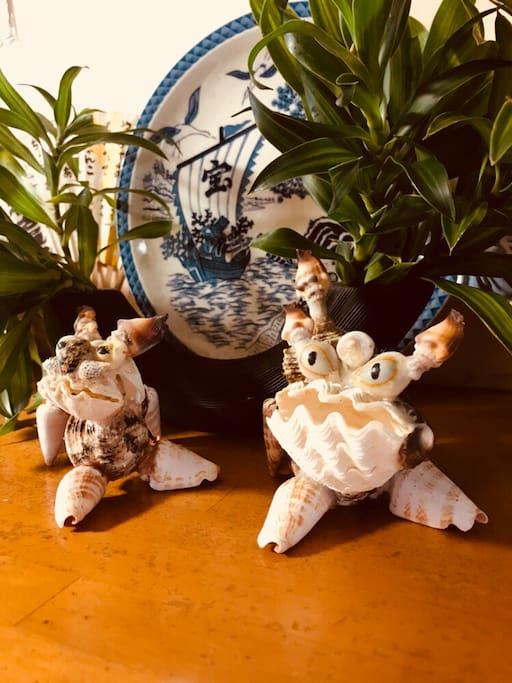 玄関では お父さん手作りの貝殻シーサーがお出迎え♪