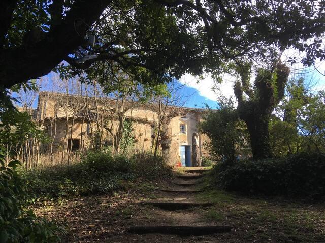 Bambou, gîte écologique au Mas Novis en Cévennes
