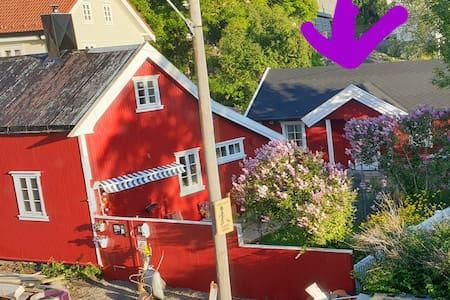 Camp Lofoten