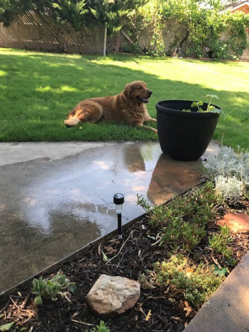 Riggs enjoying the back patio