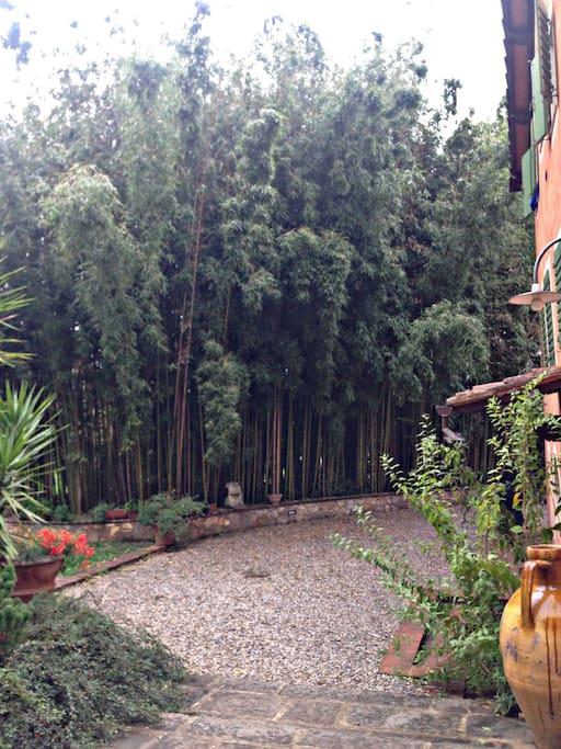 Il Canneto  Bamboo canes.