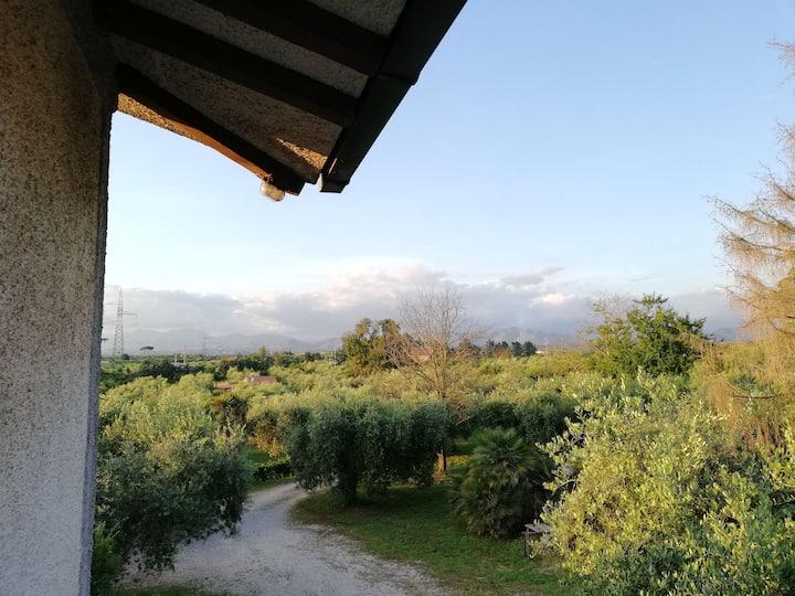 Villa le Mimose