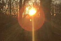 a farmer's solstice tree