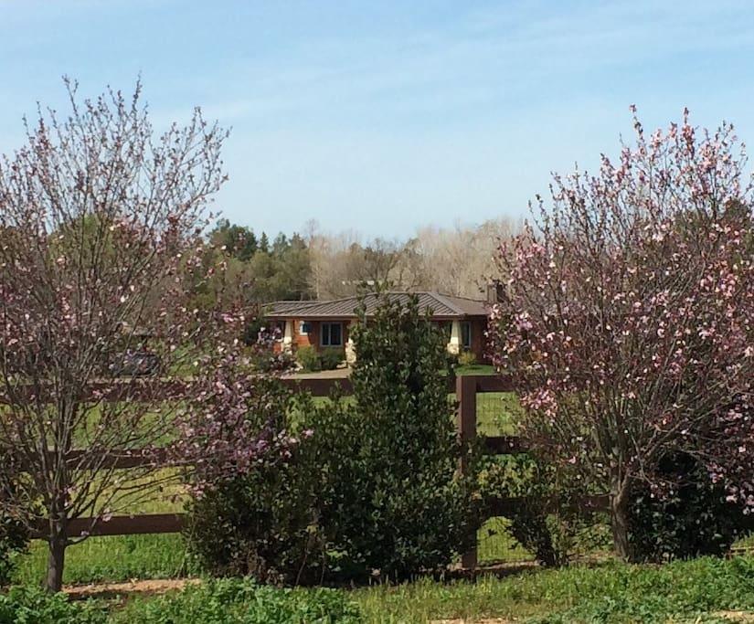 spring at daybreak farm