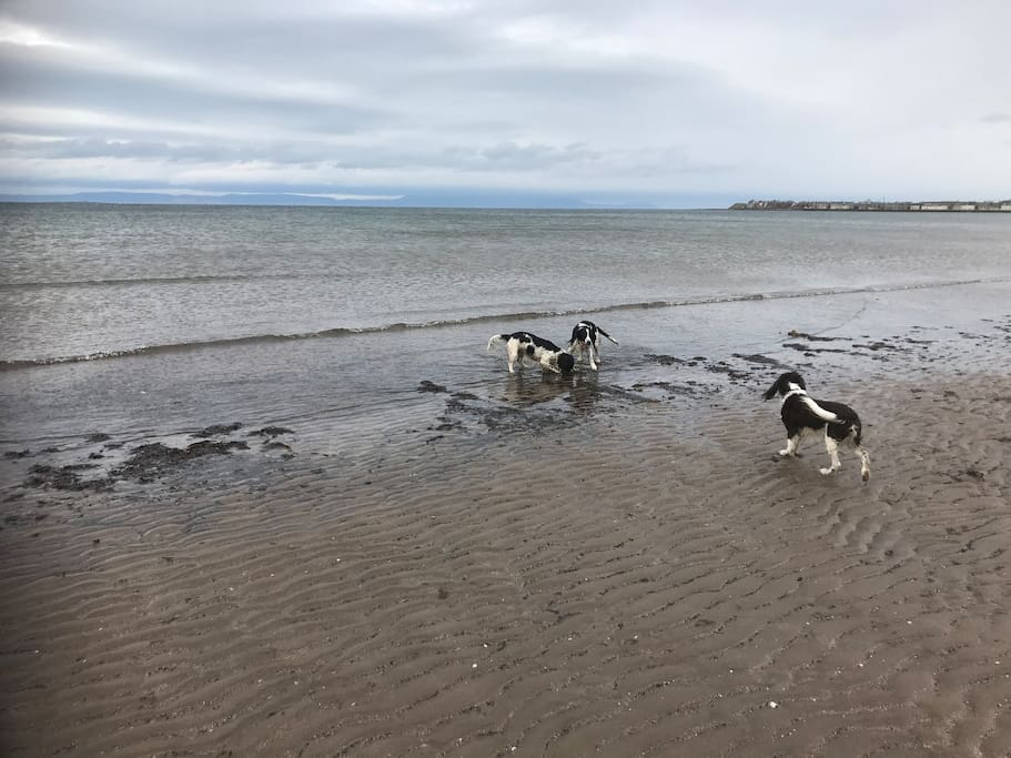 3 of our dogs on South Troon Beach