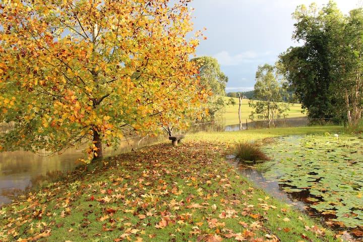 Blazing Autumn colours