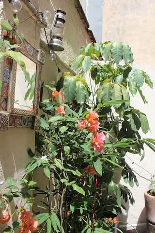 Amplio depa con terraza en Condesa admite mascotas