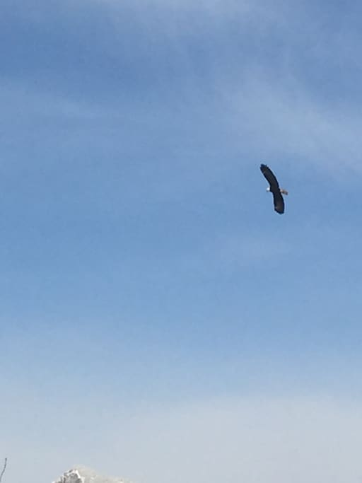 Get up early morning and watch our resident Bald Eagles hunting the Columbia