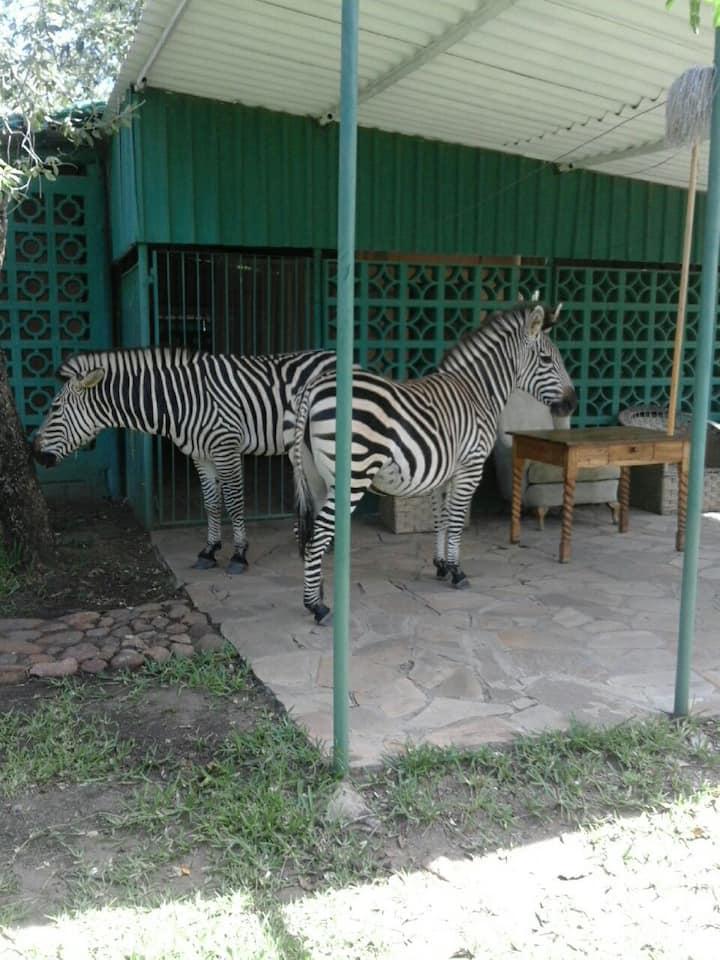 Warthogs Safari Camp Cottage x 1