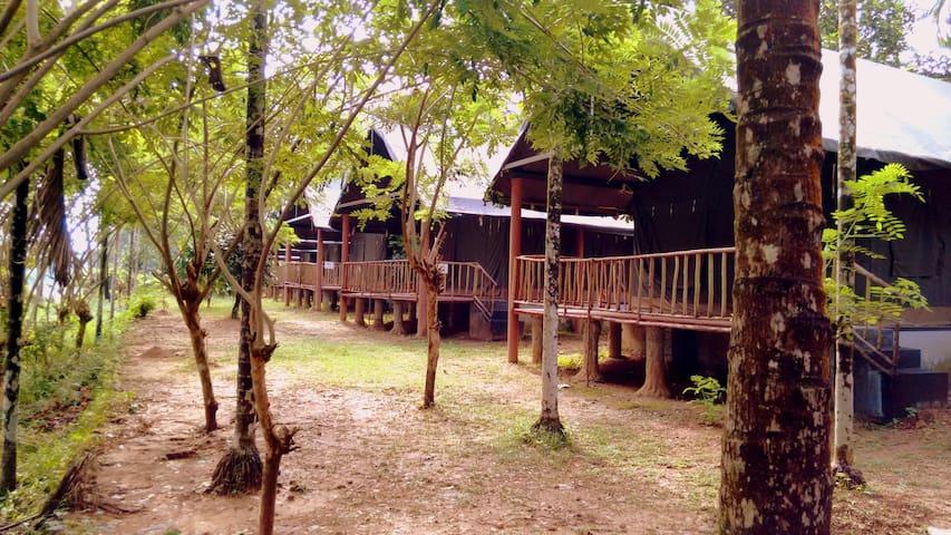 Adventurous Camp